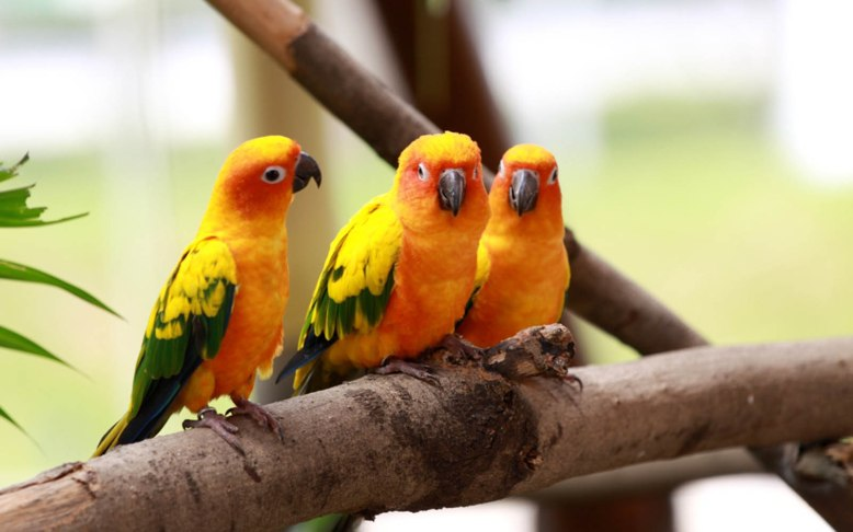 beautiful-love-birds-image